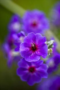 Purple flower by Danita Delimont