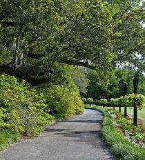 Bellingrath Gardens in Theodore, Alabama, USA. by Danita Delimont
