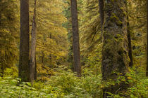 USA, Alaska, Tongass National Forest von Danita Delimont