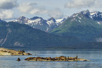USA, Alaska, Glacier Bay National Park von Danita Delimont