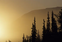 USA, Alaska, Fog, Sunrise, Winter, Denali National Park von Danita Delimont