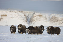 USA, Alaska, Arctic National Wildlife Refuge von Danita Delimont