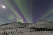 Aurora Borealis by Danita Delimont