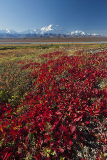 Denali National Park, Alaska, Mt by Danita Delimont