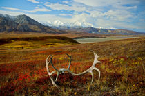 Mighty Denali, highest mountain in all of North America von Danita Delimont