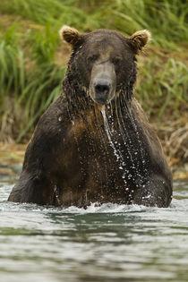 North America, USA, SW Alaska, Geographic Harbor, coastal Ka... von Danita Delimont