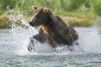 North America, USA, Alaska, Geographic Harbor, Katmai Nation... von Danita Delimont