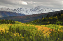 Alaska Range in Autumn, Taiga, Tundra, Denali National Park,... by Danita Delimont