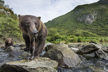 Brown Bear and Spring Cub, Katmai National Park, Alaska von Danita Delimont