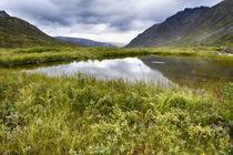 USA, Alaska, Hatchers Pass von Danita Delimont