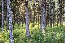 Kasilof River forested area. von Danita Delimont