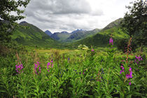 Valley of wildflowers in Alaskan mountain range by Danita Delimont