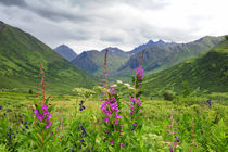 Wildflower front and center in this Alaskan valley, mountain landscape von Danita Delimont