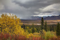 Autumn Color along the Glennallen Highway by Danita Delimont
