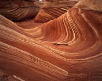 USA, Arizona, Wave, Coyote Buttes area of Paria Canyon, Verm... by Danita Delimont