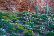 USA, Arizona von Danita Delimont