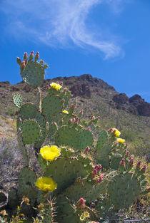 USA, Arizona by Danita Delimont
