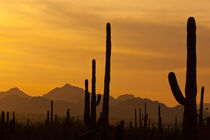 USA, Arizona, Saguaro National Park, Sonoran Desert von Danita Delimont