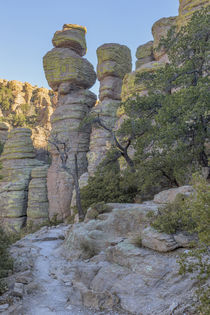 USA, Arizona, Chiricahua National Monument by Danita Delimont