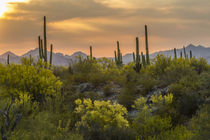 USA, Arizona, Saguaro National Park von Danita Delimont