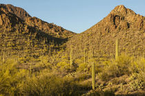 USA, Arizona, Sonoran Desert by Danita Delimont
