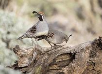 USA, Arizona, Buckeye von Danita Delimont