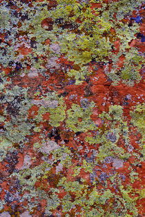 Lichen on Red Rock formations near Flagstaff, Arizona Credit... by Danita Delimont