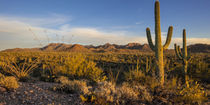 Saguaro NP von Danita Delimont