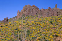 USA, Arizona, Tonto National Forest, Superstition Wilderness... von Danita Delimont