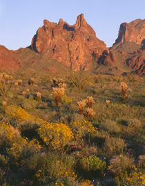 USA, Arizona, Kofa National Wildlife Refuge, Evening light o... by Danita Delimont