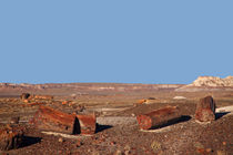 USA, Arizona, Petrified Forest National Park by Danita Delimont