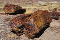 Logs, Petrified Forest National Park, Arizona, USA by Danita Delimont