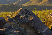 Petroglyphs, Signal Hill, Saguaro National Park, Arizona, USA. by Danita Delimont