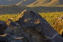 Petroglyphs, Signal Hill, Saguaro National Park, Arizona, USA. von Danita Delimont