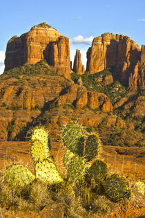 Cathedral Rock at Sunset, Prickly Pear Cactus in Foreground,... by Danita Delimont