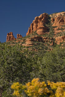 Autumn color, Fay Canyon, Red Rock Secret Wilderness, Coconi... by Danita Delimont