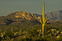 Sunset, Superstition Mountains, Lost Dutchman State Park, Ap... by Danita Delimont