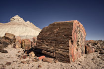 Petrified Forest National Park, Arizona by Danita Delimont