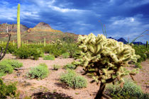 Organ Pipe Cactus National Monument, Ajo Mountain Drive wind... by Danita Delimont
