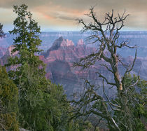 Wotans Throne, North Rim, Grand Canyon National Park, Arizona, USA by Danita Delimont