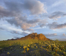 Kofa Mountain and cholla cactus at sunset, Kofa National Wil... von Danita Delimont