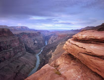 Colorado River at Toroweap Overlook, Grand Canyon National P... von Danita Delimont