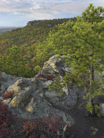Looking out from the Palisades Overlook, Petit Jean State Pa... by Danita Delimont