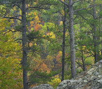 Colorful trees in autumn, Petit Jean State Park, Arkansas, USA by Danita Delimont