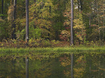 Autumn at Millwood Lake State Park, Arkansas, USA von Danita Delimont