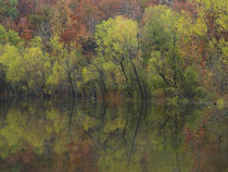 Autumn foliage along Gillham Lake, Arkansas, USA by Danita Delimont