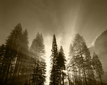 USA, California, Yosemite National Park, Sunlight beaming th... von Danita Delimont
