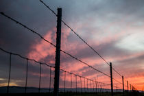 USA, California, Central Valley, Vernalis, off Rt 132, sunset von Danita Delimont