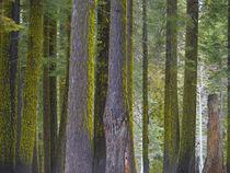 USA, California von Danita Delimont