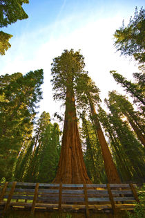 USA, California, Sequoia, Kings Canyon National Park, Genera... by Danita Delimont